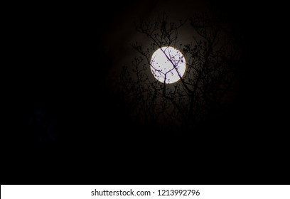 Supermoon behind branches in November 2016