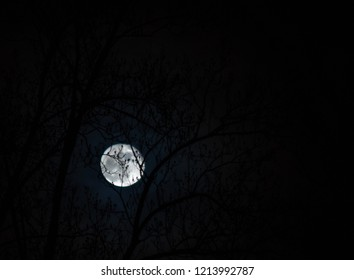 Supermoon behind silhouetted trees mid November 2016