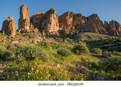 Superstition mountain at Lost Dutchman State park with Mexican Goldpoppies in the foreground, AZ, USA