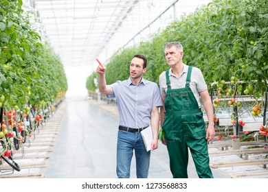 Supervisor pointing at plant while discussing with farmer in greenhouse