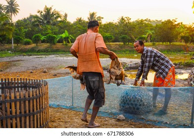 Suphan Buri, Thailand - Apr 3, 2017 - Farmer with ducks