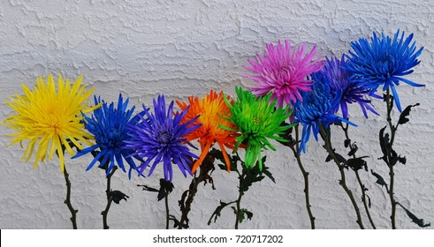 """"""" Support Each other""""  Colorful flowers arranged on a textured white background to create an inspirational Image."""