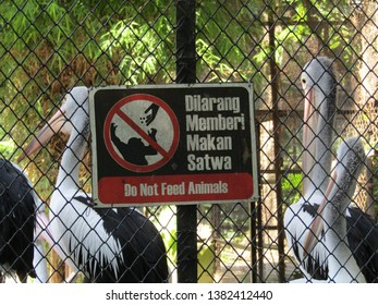 Surabaya, Indonesia - April 22 2019: Do not feed animals sign in front of pelican birds cage at Surabaya Zoo. Prohibited to give food because its not safe and will cause serious illness to animal