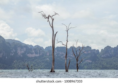 Surat Thani Province, Thailand - September 28, 2017: Khao Sok National Park.  Cheow Lan Lake.The most beautiful and peaceful place in Thailand. Three dead trees stick out from under the water.