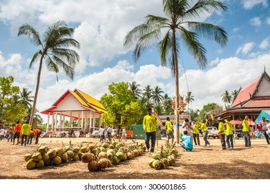 Suratthani,Thailand, March 29,2015: People and monkeys pick coconuts competition. To reestablish the unity of the group fed the monkeys to pick coconuts applications.