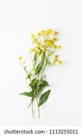 Surepka is a plant with yellow flowers in cooking and folk medicine. Copy space text