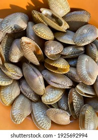 Surf clam, Short necked clam, Carpet clam, Venus shell, Baby clam