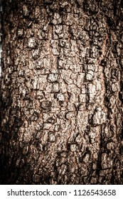 The surface of the bark.