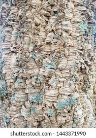 Surface of the cork oak trunk, background and texture