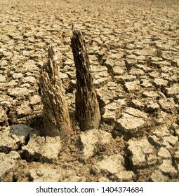 Surface of cracking parched earth heat stroke disaster ecology death tree Valley field Climate change Causing a hot world, fast evaporating water, drought near Split ground Living organisms have died  - Shutterstock ID 1404374684