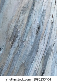 surface of ghost gum tree