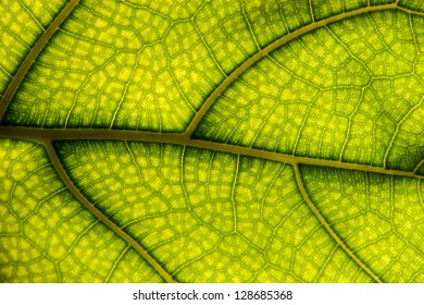 The surface of the leaf of the tree