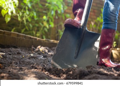 Surface level view of senior woman standing with shovel on dirt at backyard