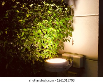 surface mounted uplight to illuminate the shrub leaves and concrete column
