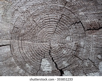 Surface of the old cut tree