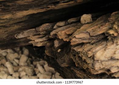 Surface of an Old Wood Macro Closeup shot