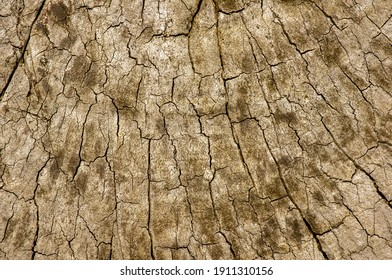 The surface of an old wood for natural background
