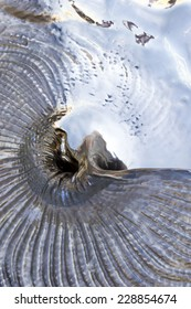 The surface of the silver shell closeup