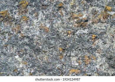 Surface of sulfide copper-nickel disseminated ore. Mineral composition: chalcopyrite, pyrrhotite, pentlandite, cubinite, platinum group. Golden shiny drops of ore.