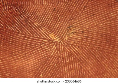 Surface of terracotta engraved with geometric fine lines