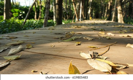 Surface of wooden decking footpath like walk way in a mess of fallen dry leaves to the garden in the little forest with small sun light shadow