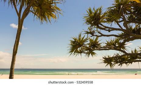 Surfer clothes on a tree in Coolangatta, Gold Coast in Australia