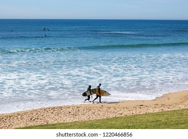 Surfer walking along the beach with turquoise  water on sunny day in Torquay beach, Australia.