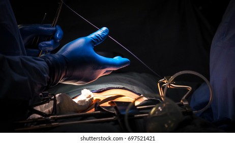 Surgeon at the operating table.