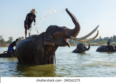 SURIN, THAILAND - December 20: mahout riding his elephant in pool to bathing.2013.