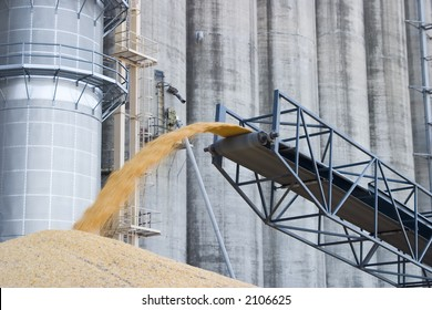 surplus corn being off loaded and piled on the ground