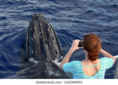 A surprise close-up encounter by a humpback whale enjoyed by whale watchers.