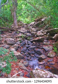 Surprise Creek in the rainforest of Barron Gorge National Park in Queensland Australia