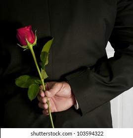 Surprise Red Rose