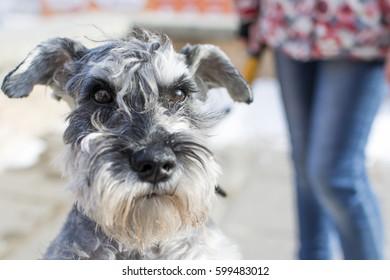 Surprised dog.