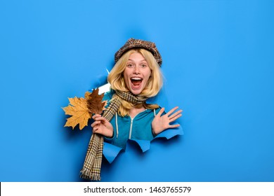 Surprised girl with autumn leaves looking through paper hole. Blond girl in cap, scarf with maple leaves. Happy girl in trendy hat. Autumn sales. Discount, sale. Yellow maple leaf. Autumn. Copy space.