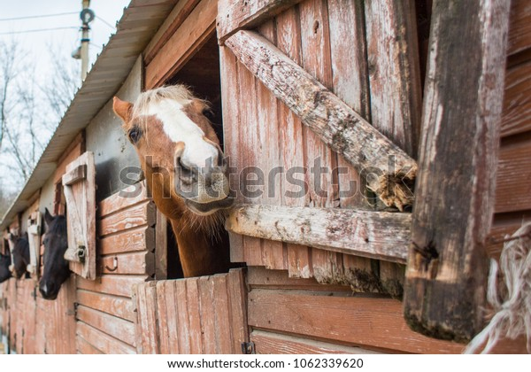 surprised horse in the stall, close up view  of fun horse snout with copy space
