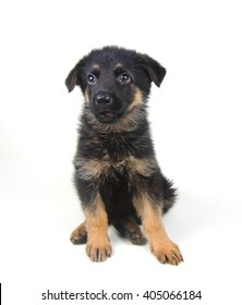 Surprised little German shepherd puppy (isolated on white), selective focus on the eyes