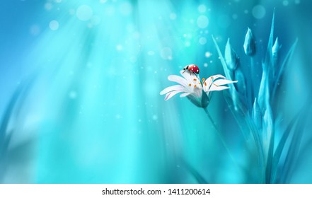 Surprisingly beautiful soft elegant white flower with buds and ladybug on blue background in rays of light macro. Exquisite graceful easy airy magic artistic image nature, copy space.