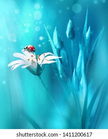 Surprisingly beautiful soft elegant white flower with buds and ladybug on blue background in rays of light macro. Exquisite graceful easy airy magic artistic image nature.
