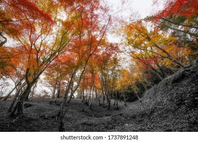 Surreal Autumn garden From black and white to colorful