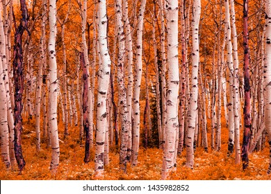 Surreal colorful fall aspens in the Utah Mountains, USA.