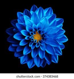 Surreal dark chrome blue flower dahlia macro isolated on black