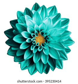 Turquoise Flower Images Stock Photos Vectors Shutterstock