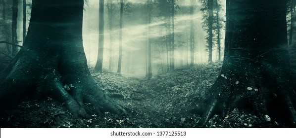 surreal dark forest with old trees