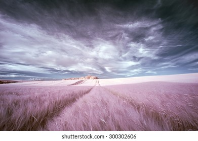 Surreal false color infrared Summer landscape over agricultural fields