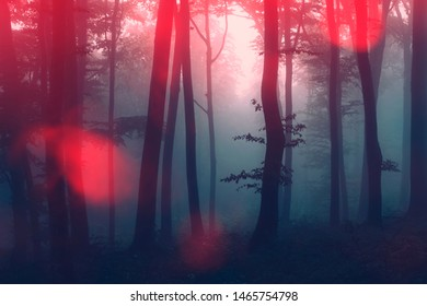 surreal fantasy forest landscape, night scene with strange light in scary woods