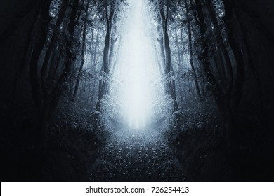 surreal forest scene, path through dark symmetrical woods landscape