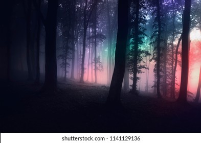 surreal forest with strange light at night