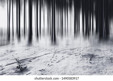 Surreal frozen ice forest. Forest black and white Winter