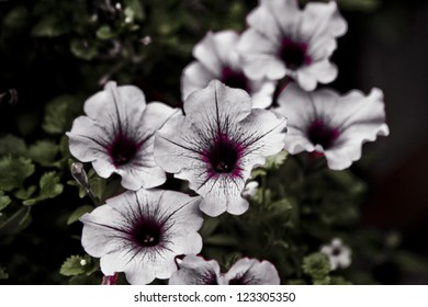 Surreal Garden Series - Odd Petunias